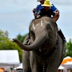 Elephant Polo Tournament in Bangkok